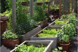 Commercial food production on City Lots
