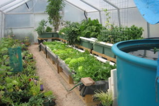 Launch an aquaponics and greens gardening business