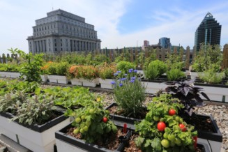 Use rooftop space for gardens and greenhouses