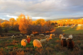 Help purchase sheep for a farm held in a land trust for new farmers