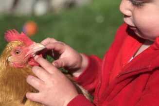 Adapt the current bylaw to allow homeowners to keep 3-4 back yard hens