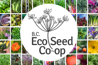 Sow local! Support the BC Eco Seed Co-op's expansion