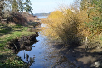 Restore the ecological integrity of Mermaid creek highly impacted by inappropriate trail location